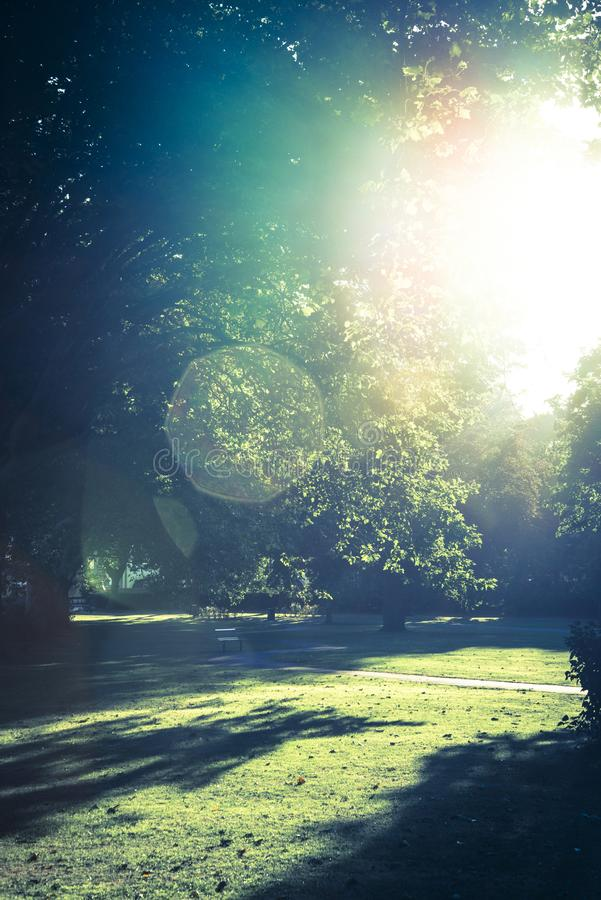 Последнее солнце в парке стоковая фотография rf