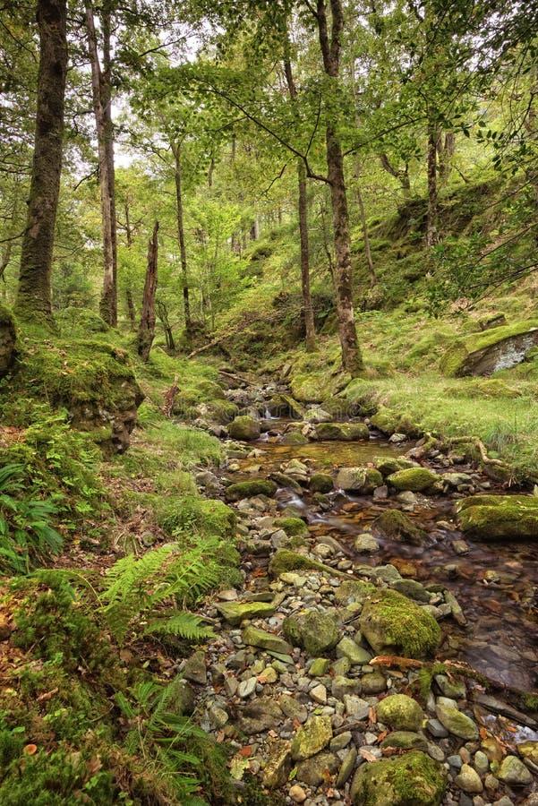 Поток бежит вниз через высокие Hows деревянные, район озера стоковые фотографии rf