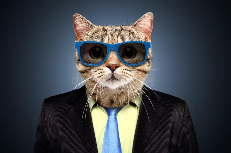 Портрет кота в деловом костюме стоковые изображения rf