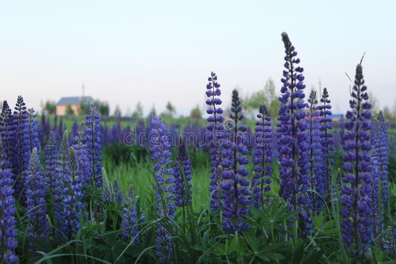 полевые цветы royalty free stock images