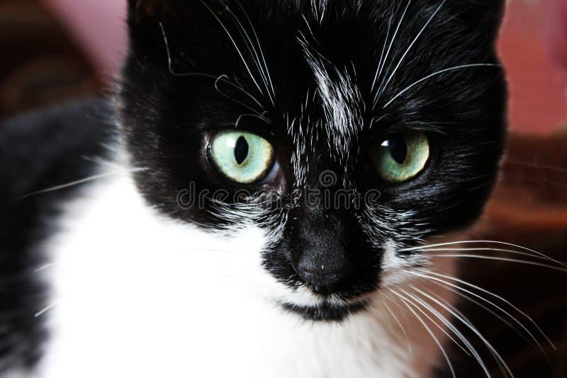 КР¾ шка/Cat royaltyfri bild