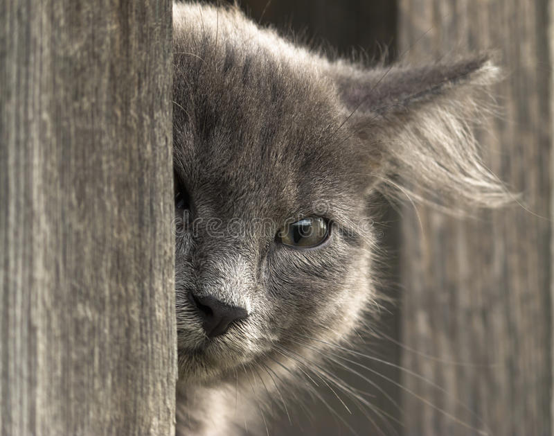 Кitten tittar ut, blickar in i kameran med ett öga fotografering för bildbyråer