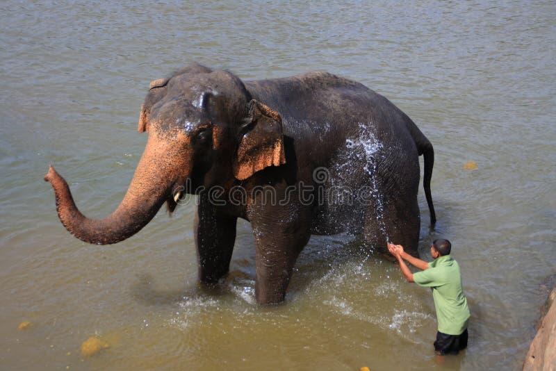 Ð•,lephant badning arkivfoto