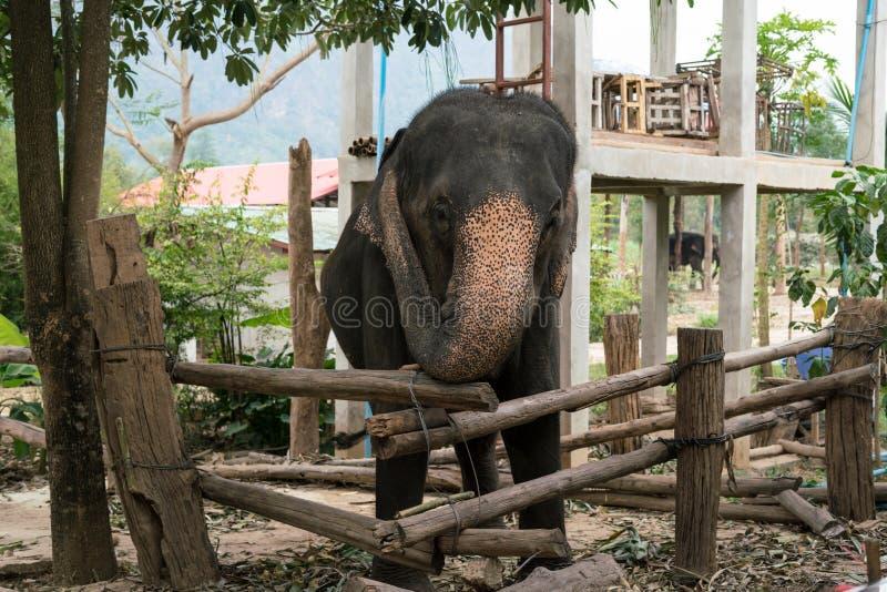 Ð•lephant стоковое изображение rf