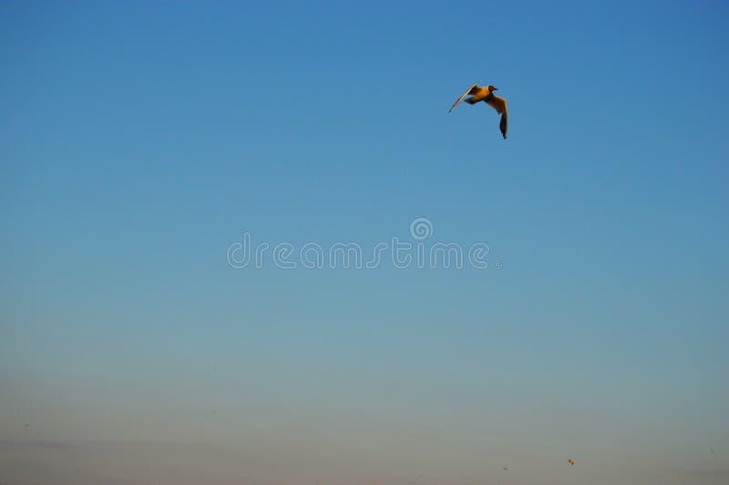 Ð在天空的鸟 免版税库存图片