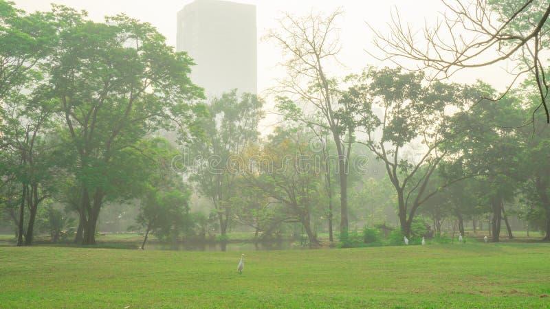 Двор лужайки зеленой травы и зеленые деревья листьев с группой в составе белый идти птицы, зданием на предпосылке под туман и пас стоковые фото