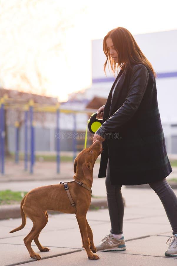 Девушка и собака на поводке на фоне захода солнца Прогулка вокруг города с собакой стоковая фотография rf