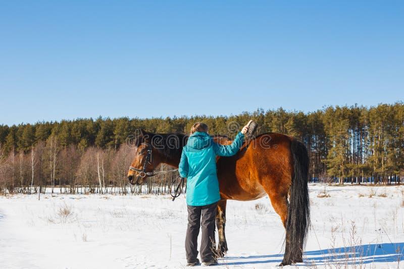 Девушка чистит лошадь щеткой с пылью и стерней на солнечный день в поле зимы стоковое фото rf