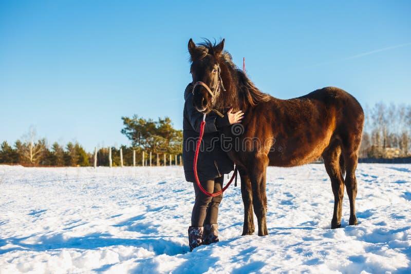 Девушка обнимает арабскую черную лошадь Поле зимы снежное на солнечный день стоковые изображения