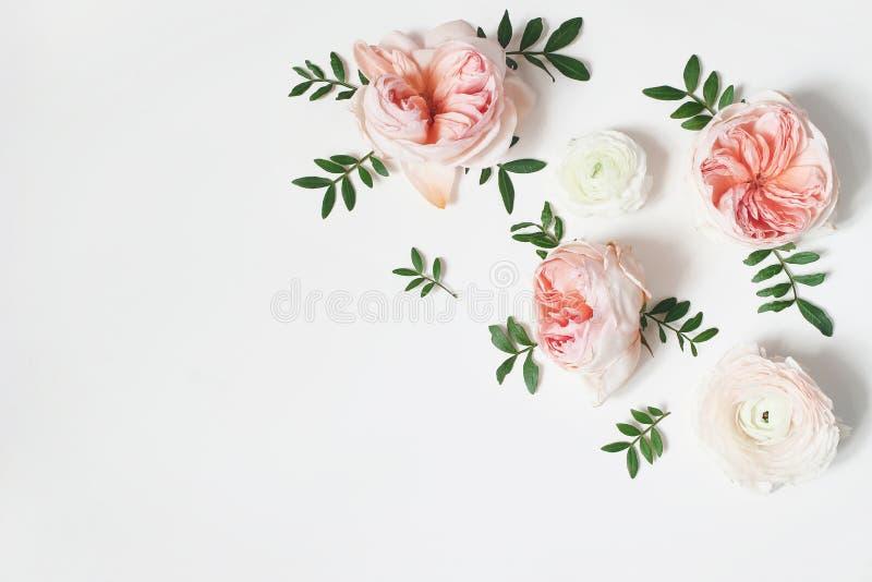 Декоративный угол, флористический состав с розовыми английскими розами, лютик и зеленые листья на белой предпосылке таблицы стоковое фото rf