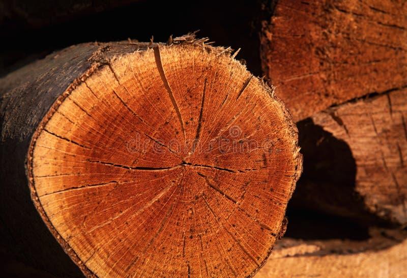 Детализируйте спиленные части древесины бука стоковое изображение