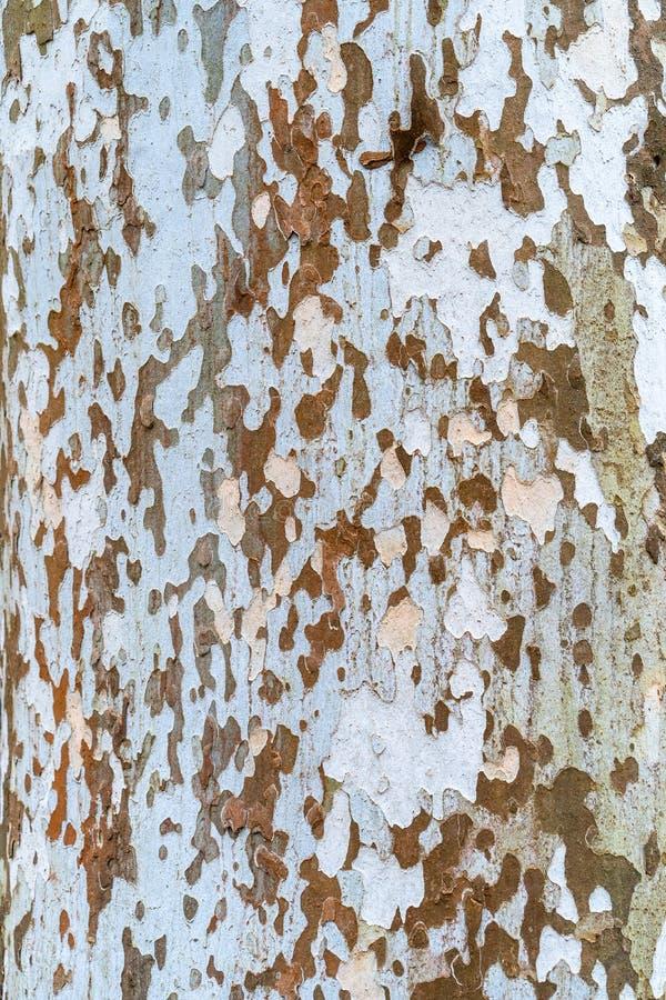 Деревенская деревянная текстура в Венгрии стоковые изображения rf