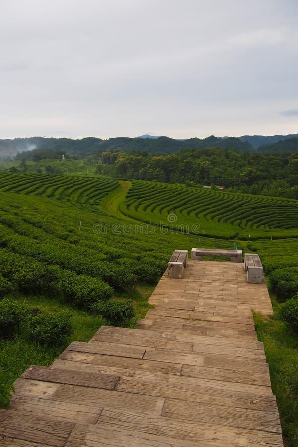 Деревянная дорожка водит к живописному месту с набором деревянного стола в плантации зеленого чая, строке около горы стоковые фото