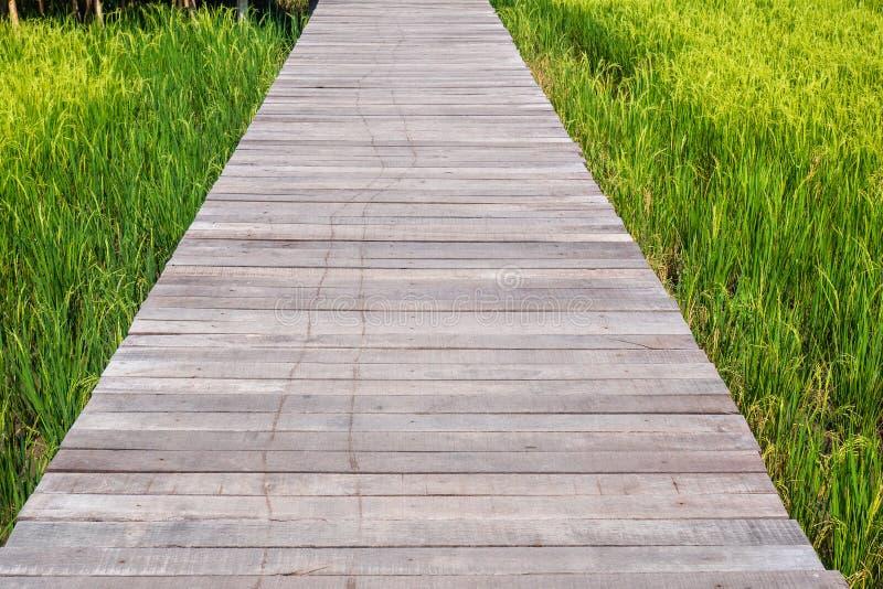 Деревянная дорожка променада через траву зеленого поля риса высокорослую зеленую водя к где-то энергии перезарядки идеи концепции стоковое изображение
