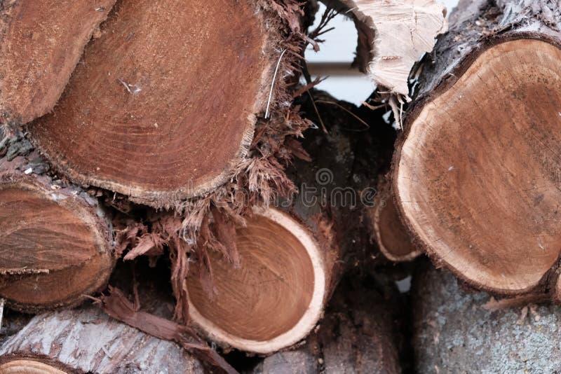 Деревянный естественный спиленный крупный план журналов для предпосылки или абстракции, фото моды плоского положенного стоковое изображение rf