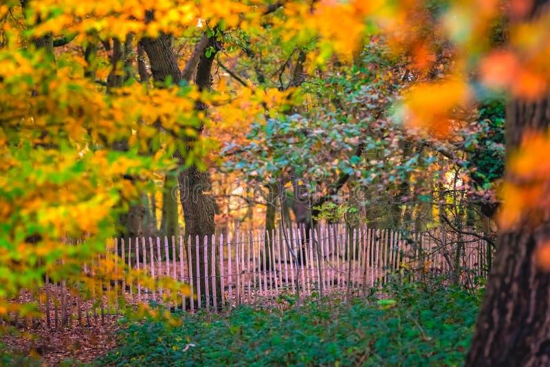 Деревянный обнесите забором осень в парке стоковые фото