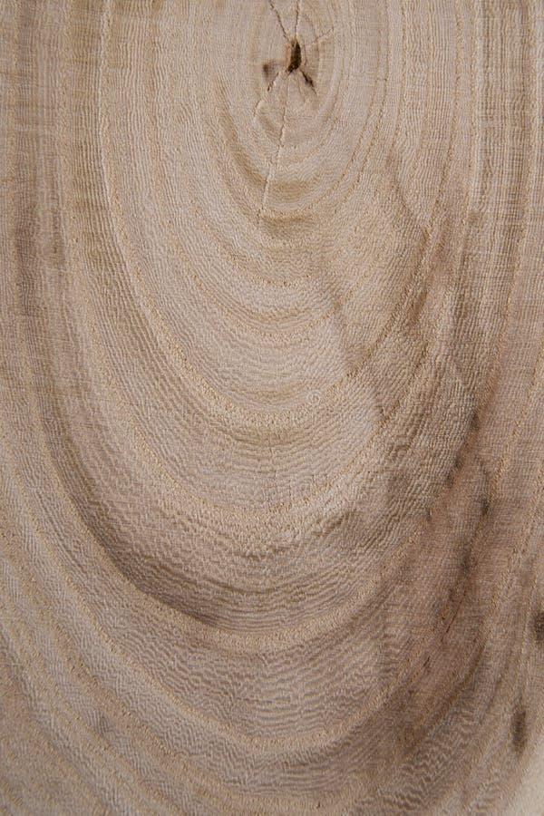 Деревянное поперечное сечение с концом-вверх ежегодных колец сняло Конец-вверх части пиломатериала стоковые изображения rf