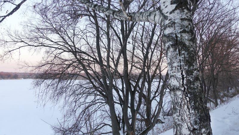 Деревья на реке в зиме стоковое фото