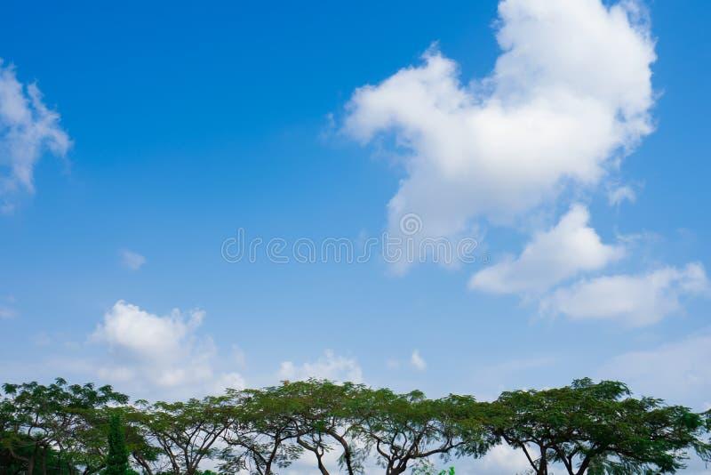 Деревья с голубым небом на общественном парке стоковое фото