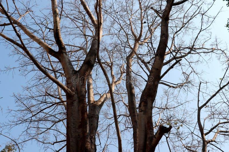 Дерево без лист принятых под яркое солнце стоковые изображения rf