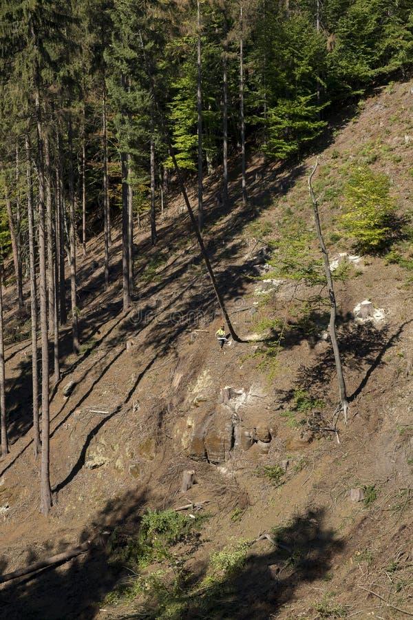 Дерево вырезывания Lumberjack стоковые фотографии rf