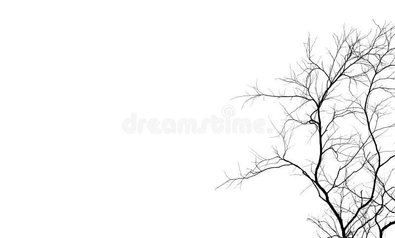 Дерево и ветвь силуэта мертвое изолированные на белой предпосылке Черные ветви фона дерева Предпосылка текстуры природы Дерево стоковое фото