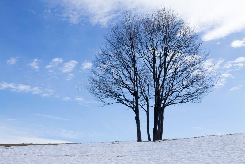 Дерево пасьянса в сезоне зимы, предпосылке природы стоковое фото