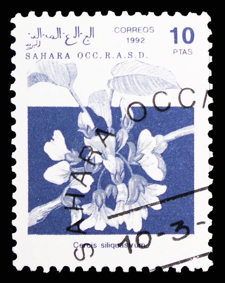 Дерево Judas (siliquastrum), serie Cercis, Сахара Occ ОКОЛО 1992 стоковые фото