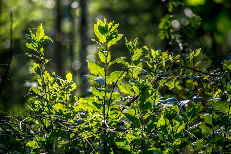 Дикие растения растя на лесе стоковые фотографии rf