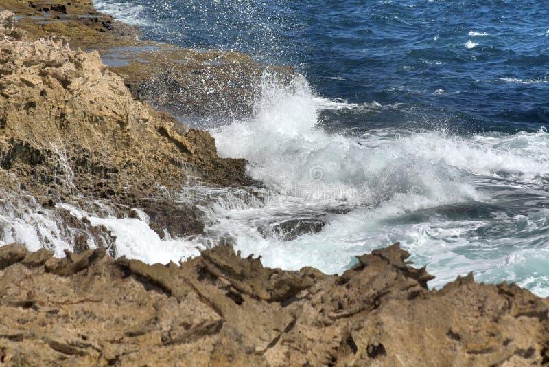 Дикий Curacao стоковое изображение
