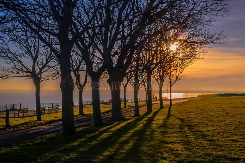 Длинные тени сформированные впечатляющими деревьями на эспланаде Ramsgate королевской на заходе солнца на зимний день как прогулк стоковые фотографии rf