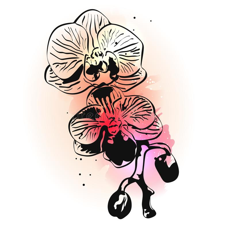Hand drawn ink orchid flower on pink watercolor splashes on white background vector illustration