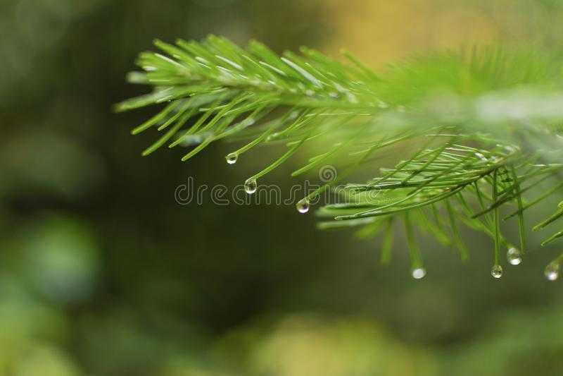 РД ÐΜÑ  у Ð ¿ Ð ¾ Ñ  Д е Ð'Ð ¾ жÐ'Ñ 在雨以后的森林里 免版税图库摄影