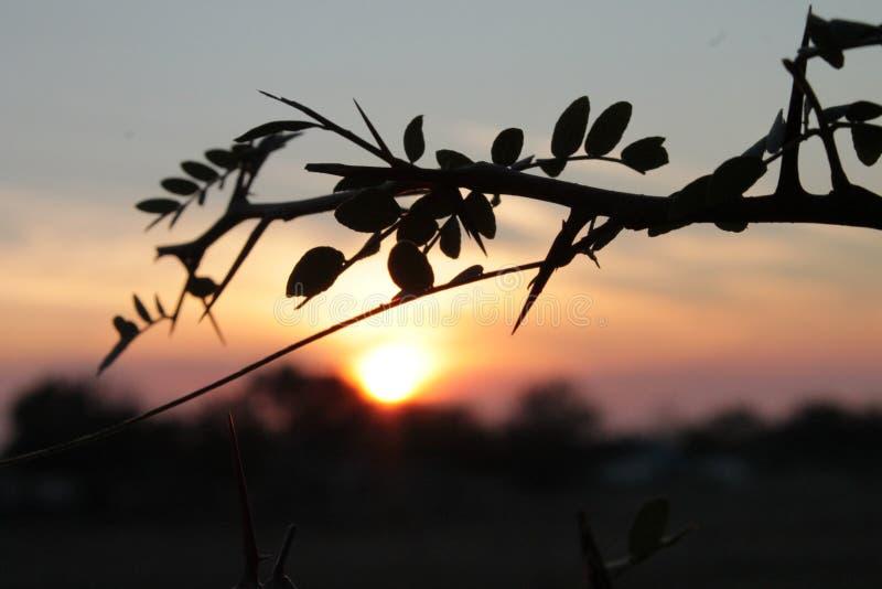 Ð--акат/Sunset royaltyfri bild