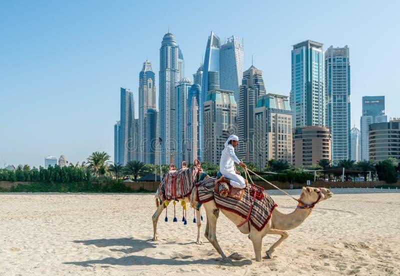 ДУБАЙ, ОАЭ - 12-ОЕ ЯНВАРЯ 2019: Бедуин с верблюдами на предпосылке небоскребов Марины Дубай стоковое изображение rf
