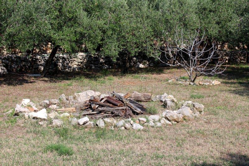 Древесина в подготовке к большому лагерному костеру окруженному с камнями и травой в местном саде с плотными оливковыми деревами  стоковая фотография rf