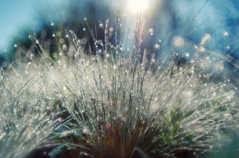 Ð-¡ loseup av nytt sommargräs med daggdroppar på soluppgångljus fotografering för bildbyråer