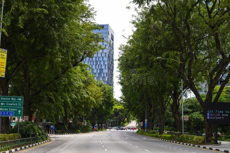 Дороги с зеленым деревом в Сингапуре стоковые изображения rf