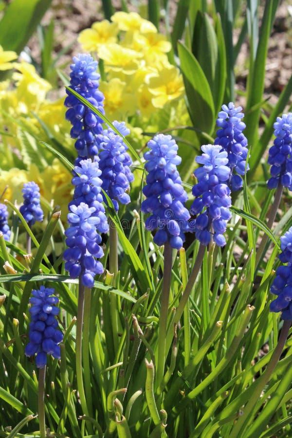 Ð-¡ olors des Frühlinges Gelb und Blau lizenzfreie stockfotos