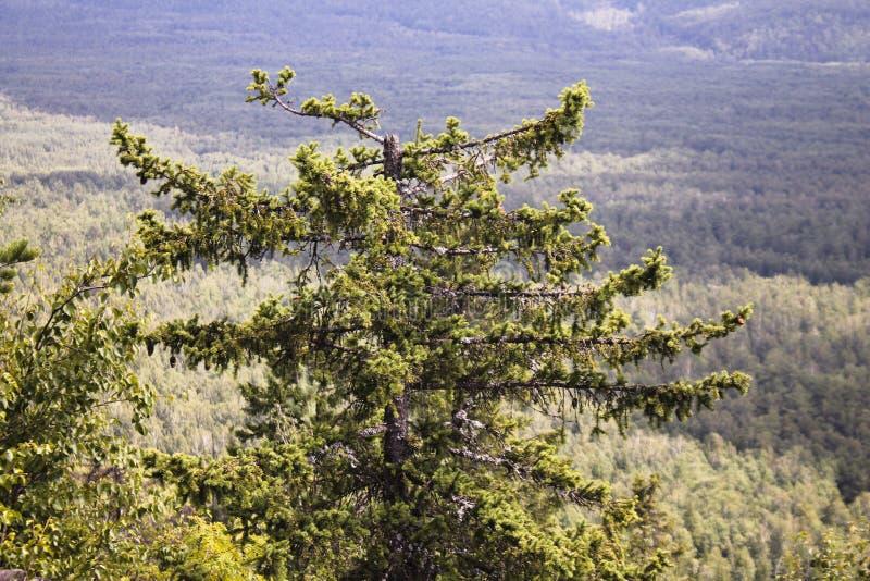 Ð  osamotniony drzewo na górze zdjęcie stock