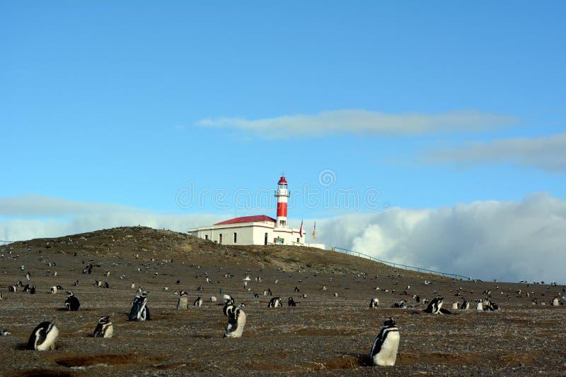 Ð-¡ som är olony av Magellanic pingvin arkivbild