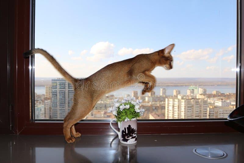 Ð-¡ am Springen durch einen Vase lizenzfreie stockfotografie