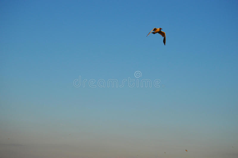 Ð- Vogel im Himmel lizenzfreies stockbild