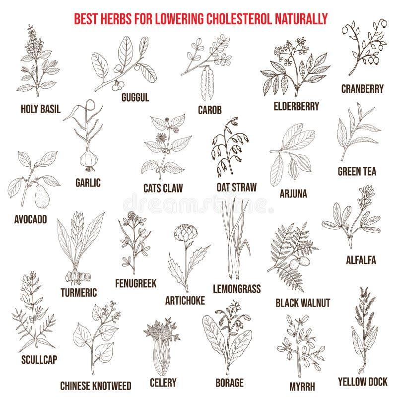 Самые лучшие целебные травы для понижать холестерол бесплатная иллюстрация