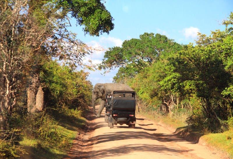 Сафари автомобиля в национальном парке Yala, Шри-Ланка стоковые фото