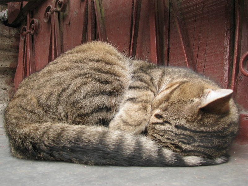 Саt. The cat curled up and slept stock photos