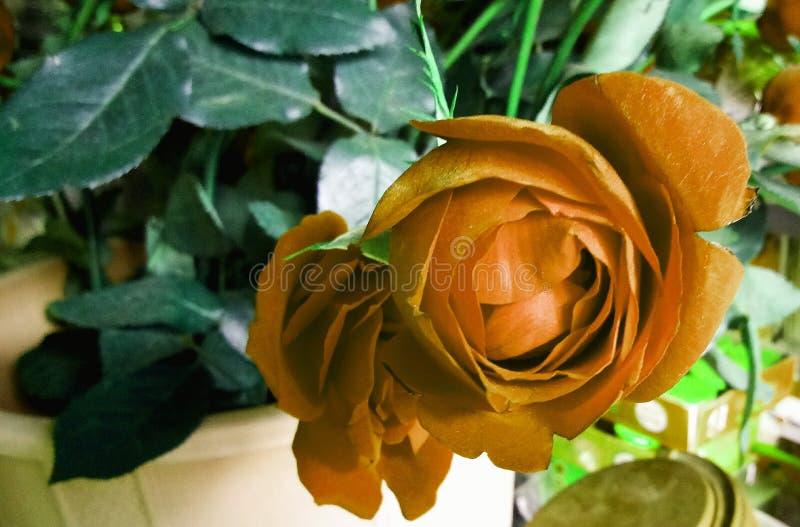 Свадьба подняла завод цветка для украшения стоковое фото