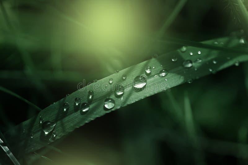 Свежая зеленая трава с падениями росы закрывает вверх Предпосылка зеленой травы Падение росы в утре на лист стоковое изображение