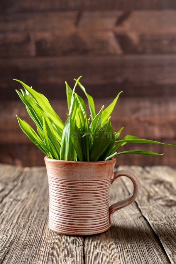 Свежие листья дикого чеснока в чашке стоковое фото