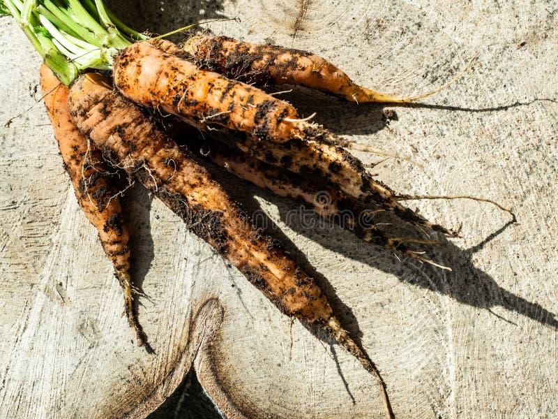 Свежие моркови свежо скомплектованные в естественном саде, грязной почве на деревянном хоботе стоковое изображение rf